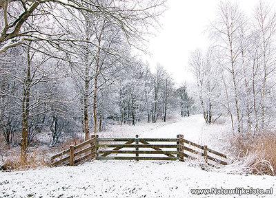 ansichtkaart winterlandschap in de Alde Feanen