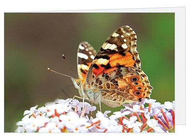 Wenskaart Atlanta vlinder - blanco kaart met enveloppe