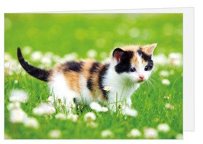 Wenskaart kitten - blanco kaart met enveloppe