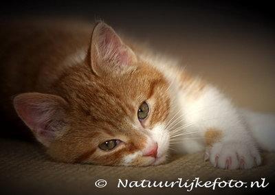 Ansichtkaart Poes, postcard cat, Postkarte Katze