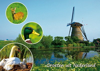 Ansichtkaart Groeten uit Nederland 003
