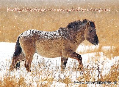 Goedkope kerstkaarten kopen, konik paard in de sneeuw, Christmas card Konik horse, Weihnachtskarte Konik Pferd im Schnee