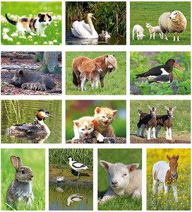 kaartenset dieren