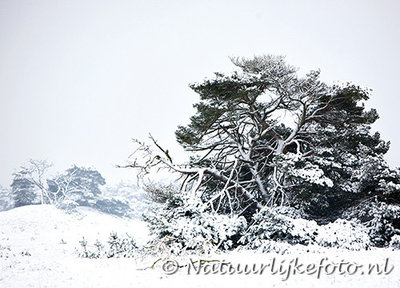 ansichtkaart winter op de veluwe, winter postcard Veluwe, Winter Postkarte Veluwe