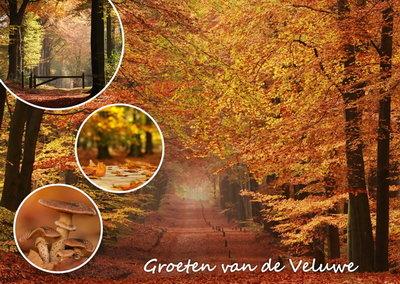 Herfstkaarten, Ansichtkaart herfst op de Veluwe, Herbst Veluwe Postkarte, Autumn Veluwe postcard