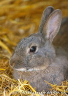Ansichtkaart konijn, postcard rabbit, Postkarte Kaninchen