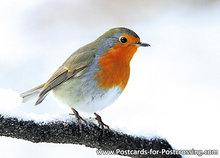 ansichtkaart Roodborstje in de winter, postcard Robin bird in winter, Postkarte Rotkehlchen Vögel im Winter
