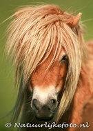 dieren kaarten ansichtkaart paard, animal postcards horse, Tiere postkarten Pferd