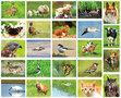 kaartenset dieren - Animal postcard set - Postkarten Set Tiere