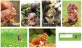 Kaartenset eekhoorns, postcard set Squirrels, Postkarten Set Eichhörnchen