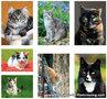 katten kaartenset